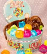 candy7